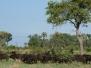 botswana1602