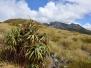 newzealandsouth03