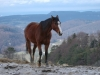 horse_view