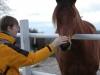 regine_horse